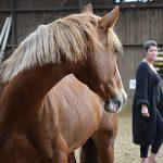 Paarden spiegelen